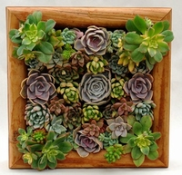 Pre-Populated Living Wall Planter with Succulents in Redwood Frame