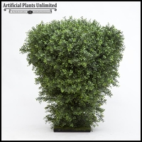 Premium Outdoor Boxwood Shrub 48in.