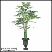Reed Palm in Urn, 8.5'