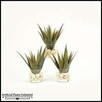 Set Of Three Agave in Glass Dish, 12 in.