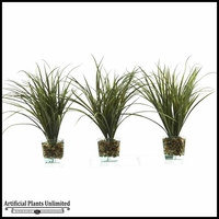 37in. Set Of Three Grasses in Square Shaped Glass