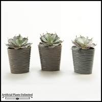 Set Of Three Succulents in Oval Ceramic Planter, 9 in.