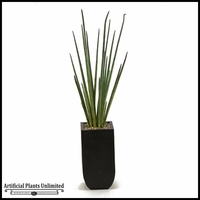 Snake Grass in Square Metal Planter, 5.5'