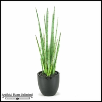 Snake Plant in Round Glossy Black Planter, 4.5'