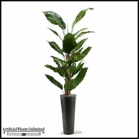 Spath Tree in Tall Round Metal Planter, 7'