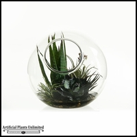Striped Agave Tillandsia and Desert Yucca in Glass Bowl, 11 in.