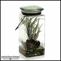 Tillandsia and Echeveria in Glass Jar with Lid, 9 in.