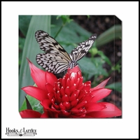 Tropical Butterfly Pollination - Canvas Artwork