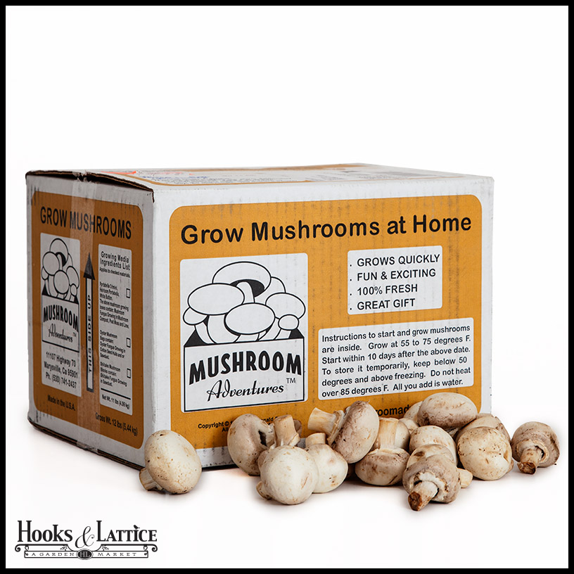 how to grow button mushrooms at home in bangalore