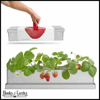 Windowsill Strawberry Grow Box