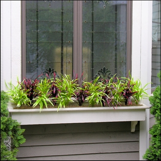 Winter Window Boxes and Winterizing Window Boxes