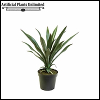 Yucca Plant 30in.