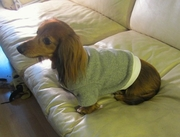 Dachshund Heathered Olive Tweed Fleece Sweater