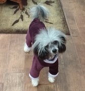 Italian Greyhound Plum Fleece Windblock Bodysuit