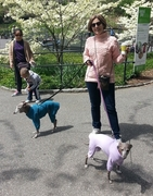 Italian Greyhound Rompers