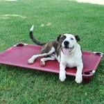 Dog Bed / Placeboard Large