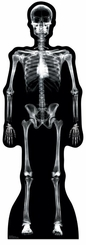 X-Ray Skeleton Cardboard Cutout Life Size Standup