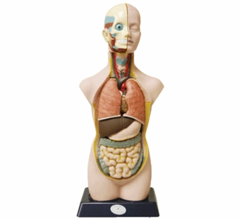 Elenco <br />Electronics Human Anatomy Body Set with Stand 20