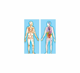 Melissa & Doug <br />Double-Sided Human Body Floor Puzzle