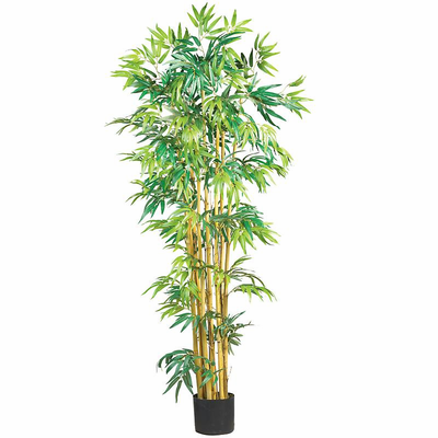 5' Multi Bambusa Bamboo Silk Tree