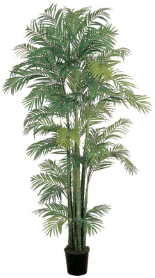 Areca Silk Palm Tree 4'