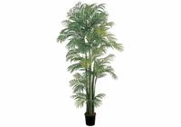 Areca Silk Palm Tree 7'