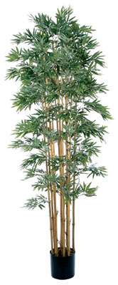 Bamboo Japanica Silk Tree 6' - Natural Trunk