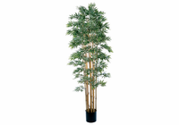 Bamboo Japanica Silk Tree 6'