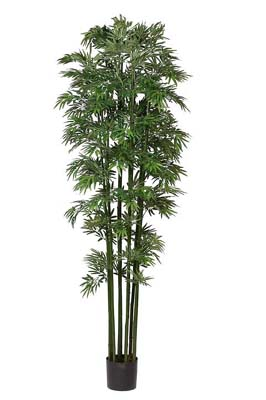 Bamboo Japanica Silk Tree 7' - Click to enlarge