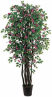 Bougainvillea Silk Tree 6'