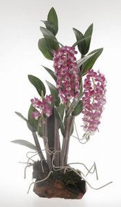 Dendrobium Silk Orchid Plant w/Root Base - Lavender
