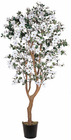 Dogwood Silk Tree 5'