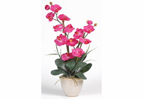 Double Stem Phalaenopsis Silk Orchid Plant