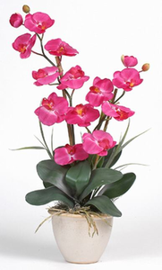 Double Stem Phalaenopsis Silk Orchid Plant - Click to enlarge