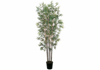 Mini Bamboo Silk Tree 6'
