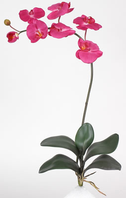 Phalaenopsis Silk Orchid Flower w/Leaves (6 Stems) - Click to enlarge