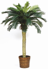 Sago Silk Palm Tree 4'