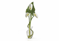 SILK Calla Lilly Liquid Illusion w/Leaves