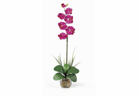 Single Phalaenopsis Liquid Illusion