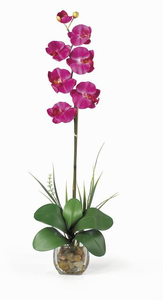 Single Phalaenopsis Liquid Illusion - Click to enlarge