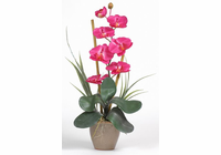Single Stem Phalaenopsis Silk Orchid Plant