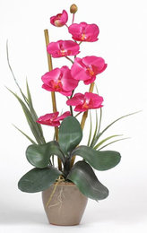 Single Stem Phalaenopsis Silk Orchid Plant - Click to enlarge