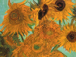 Sunflowers Video (DVD)