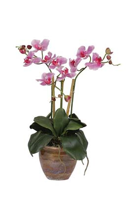 Triple Mini Phalenopsis Silk Orchid Plant - Click to enlarge