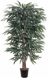 Weeping Ficus Silk Tree 5'