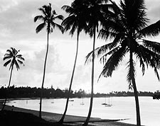 African Seashore Palm Trees Beach 1936 Photo Print for Sale