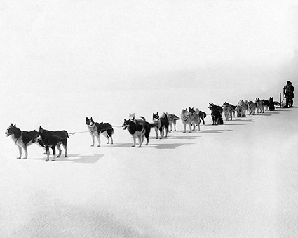 All Alaska Dog Sled Team, Nome 1914 Photo Print