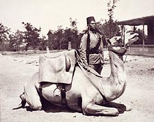 Anglo-Egyptian Sudan Soldier & Camel Photo Print for Sale