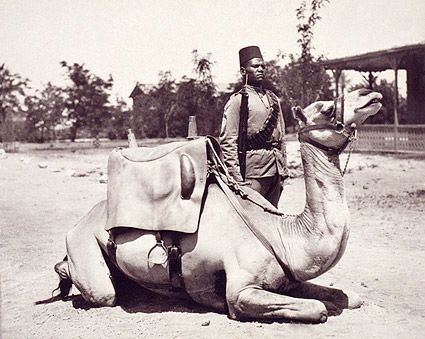 Anglo-Egyptian Sudan Soldier & Camel Photo Print