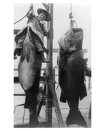Big Jewfish Fish Catalina Island Fishing Photo Print